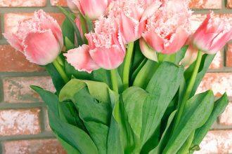 tulipes-dentelle