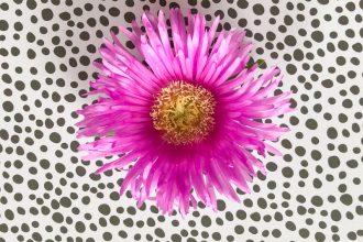 fleur-succulent