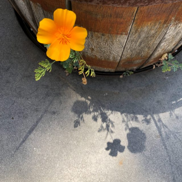 ombre-fleur