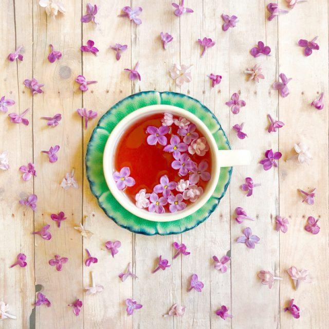 tisane-lilac