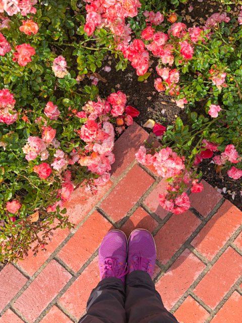 parterre-fleuri