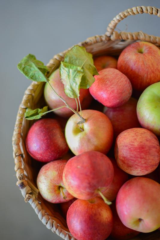 cueillette-pommes-californie