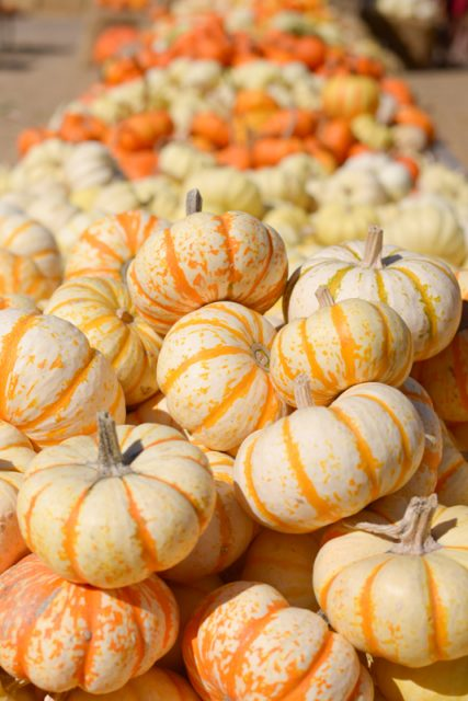 pumpkin-patch-californie