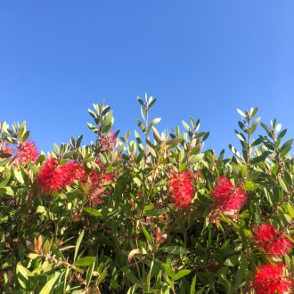 joli-bonheur-californie