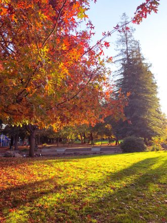 automne-californie