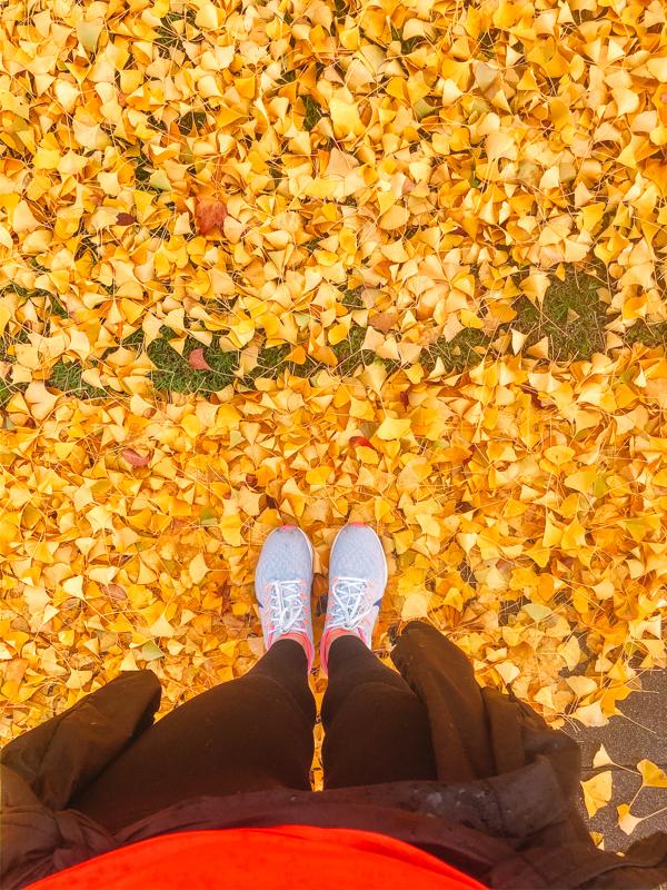 running-automne