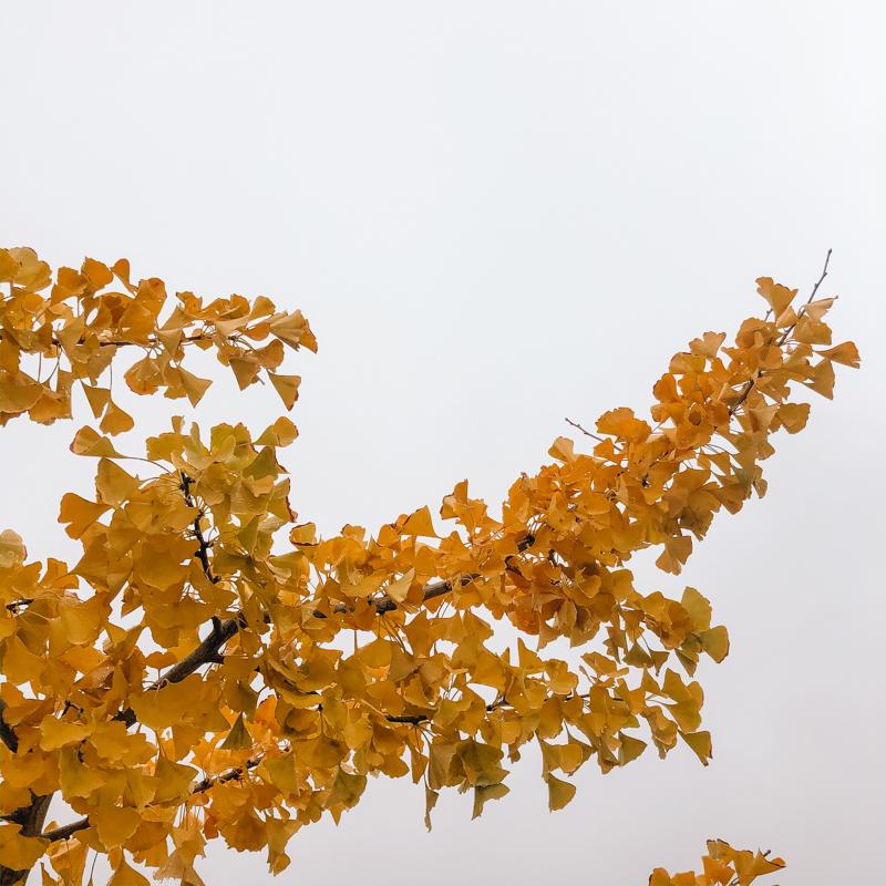 automne-pluvieux