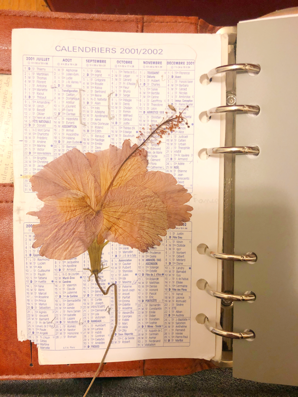 hibiscus-seche