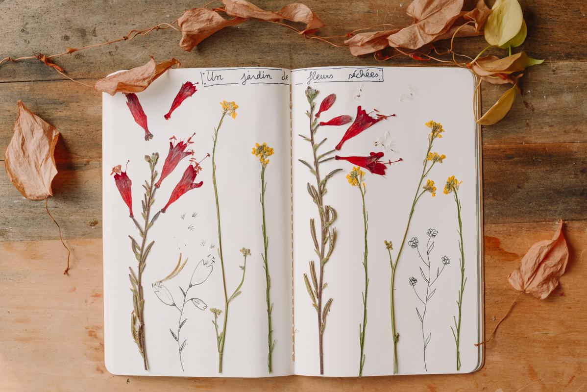 herbier-creatif